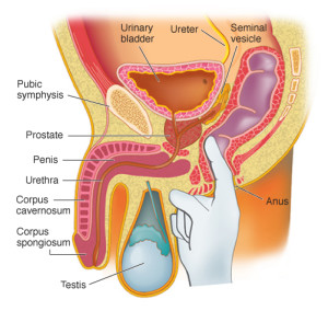 prostate examination by urology surgeon